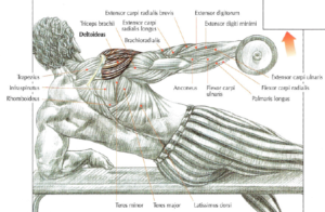 shouler exercise side lying lateral raises