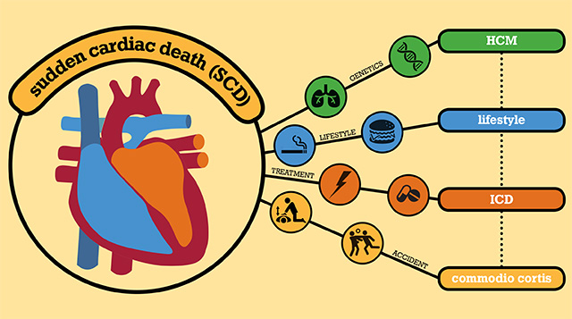 sudden, cardiac, death, sport, hearth, athlete, scd