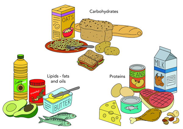 nutrient, nutrition, carbohydrate, lipide, fat, oil, protein, macro, food