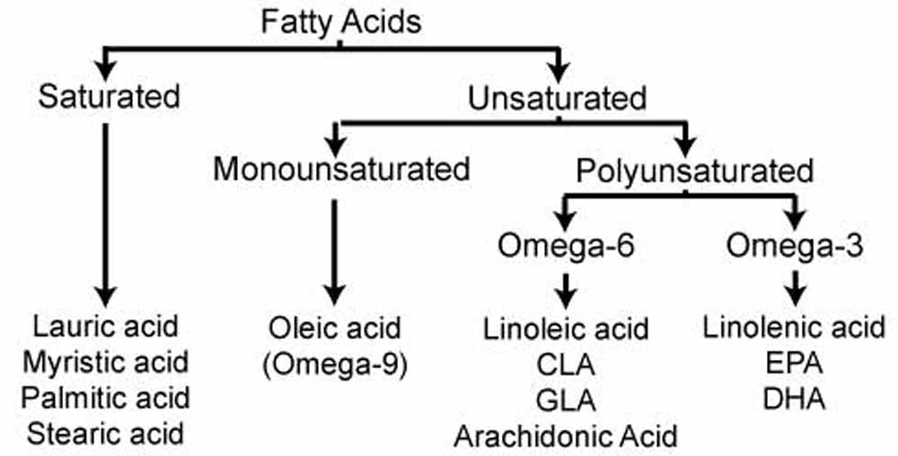 fatty, acid, saturated, unsaturated, monounsaturated, polyunsaturated, omega,3,6,9,linolenic, linoleic, cla, gla, arachidonic, epa, dha, oleic, lauric, myristic,palmitic, stearic