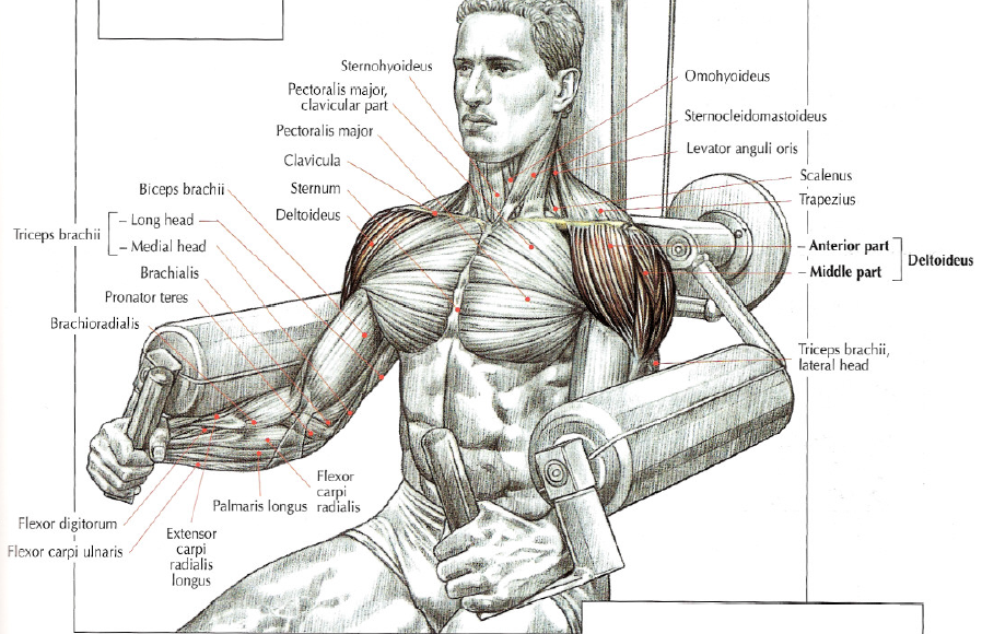 Shoulder exercise machine lateral raises
