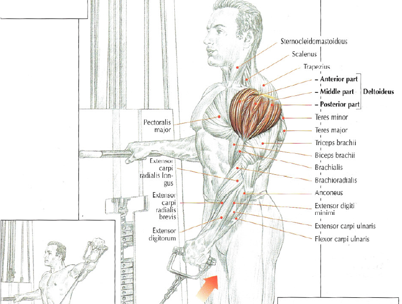 shoulder exercise low pulley lateral raises